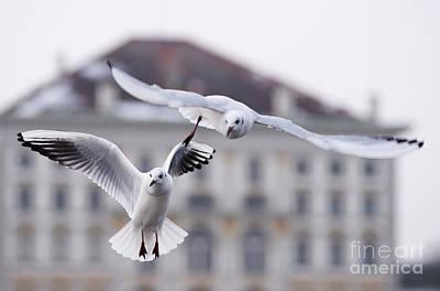 Seagulls At Nymphenburg Palace Art Print