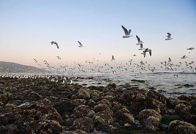 Y120831 Photograph - Seagulls Flying Over Rocky Beach by Markus Henttonen
