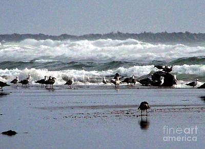 Photograph - Seagulls In The Surf by Erica Hanel