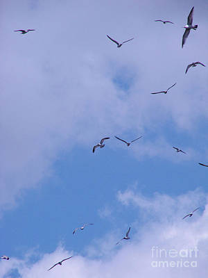 Photograph - Seagulls by Mark Holbrook