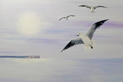 Painting - Seagulls Pt Perpendicular by Anne Gardner