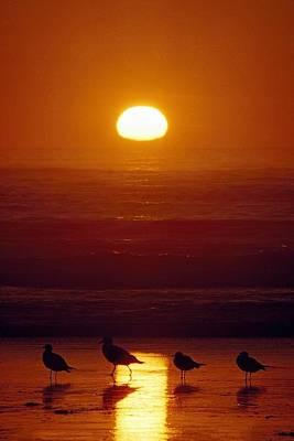 Ps I Love You - Seagulls, Shishi Beach, Washington, Usa by David Ponton