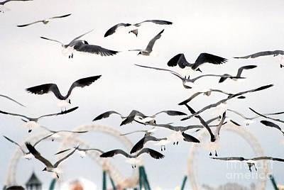 Photograph - Seagulls by Susan Stevenson