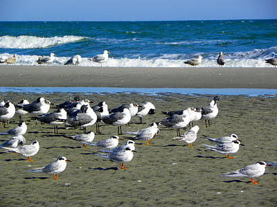 Photograph - Seagulls Waiting  by Eve Spring