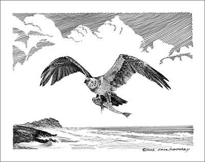 Drawing - Seahawk Dinnertime by Jack Pumphrey