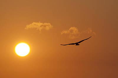 Osprey Digital Art - Seahawk Sunrise by Bill Cannon