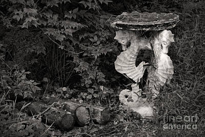 Oddball Photograph - Seahorses by Susan Isakson
