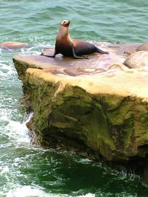 Photograph - Seal Rock by Sue Halstenberg
