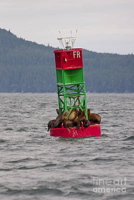 Sun Soaked Photograph - Seals On The Bouy by Darcy Michaelchuk