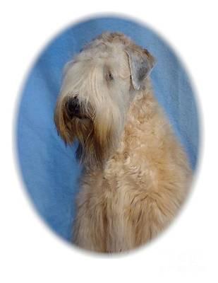 Sealyham Terrier 670 Print by Larry Matthews
