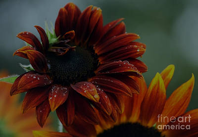 Searching For Sunshine 2 Art Print by Marjorie Imbeau