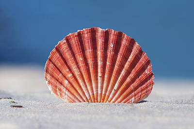 Seashell In Sand With Blue Ocean Background Art Print by Tanya Ann Photography