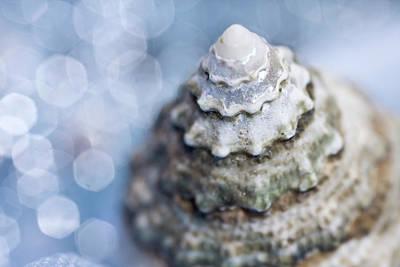 Single Object Photograph - Seashell by Lauren Tolbert Miller