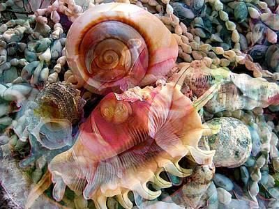 Seashell Reflections Art Print by Shirley Sirois