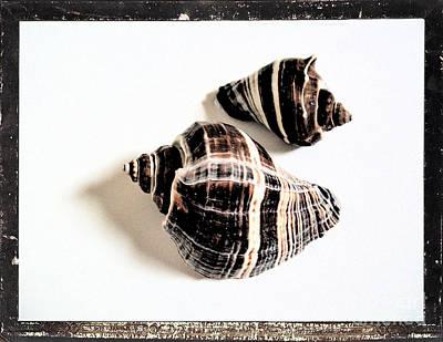 Seashells A Art Print by Marsha Heiken