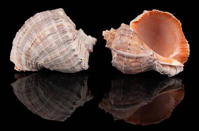 Seashell Photograph - Seashells On Black by Konstantin Gushcha