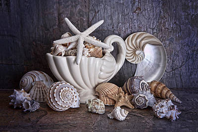 Pitcher Photograph - Seashells by Tom Mc Nemar