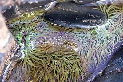 Seashore Rock Pool Art Print by Dr Keith Wheeler
