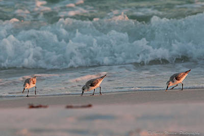 Art Print featuring the photograph Seaside Trio by Charles Warren