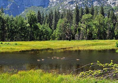Photograph - Seasonal Duck Pond by Lynn Bauer