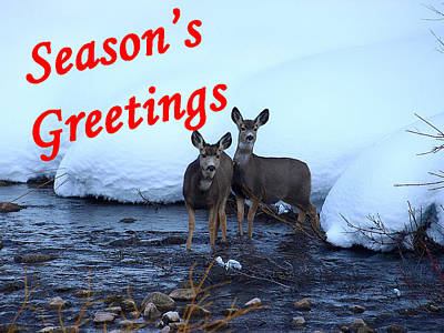 Photograph - Seasons Greetings Deer by DeeLon Merritt