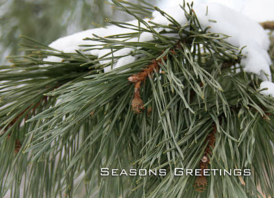 Photograph - Seasons Greetings by Laura Kinker