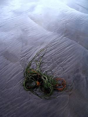 Art Print featuring the photograph Seaweed Delivery by Peter Mooyman