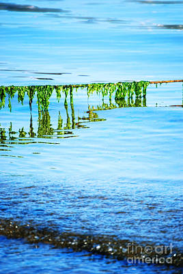 Nature Abstracts Photograph - Seaweed by HD Connelly