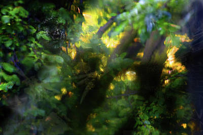 Art Print featuring the photograph Secret Forest by Richard Piper