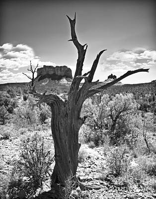 Photograph - Sedona Ahead Black And White by Lee Craig