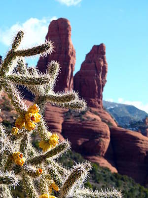 Print featuring the photograph Sedona Flowering Cholla by Cindy Wright