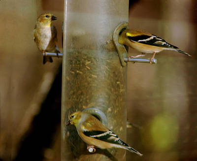 Family Photograph - Seed Eating Song Birds by LeeAnn McLaneGoetz McLaneGoetzStudioLLCcom