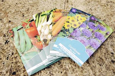 Sunflower Patch Photograph - Seed Packs by Johnny Greig