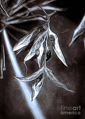 Photograph - Seeds And Seedpods by Judi Bagwell