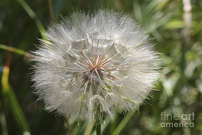 Photograph - Seeds by Donna L Munro