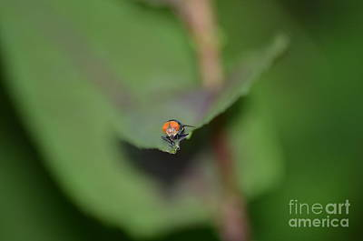 Swatting Fly Photograph - Seeing Red  by Kathy Gibbons