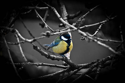 Photograph - Selective Bird by Chris Boulton