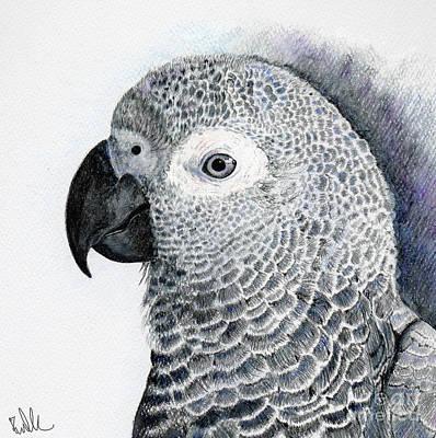 Sensitive African Grey Art Print by Barb Kirpluk