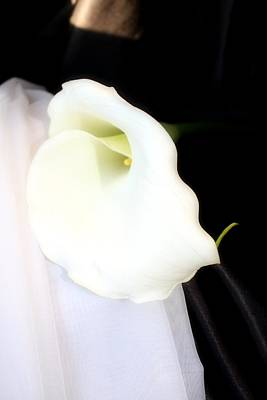 Photograph - Sensual Calla Lily by Lynnette Johns