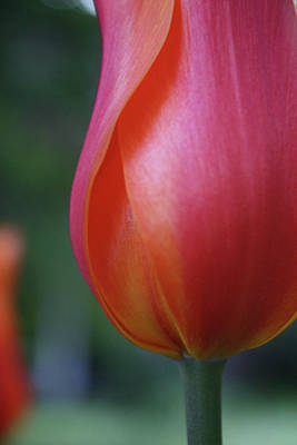 Photograph - Sensual Orange by Cathie Douglas