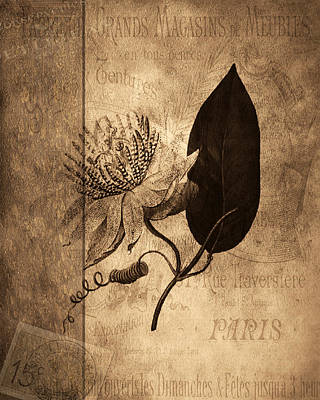 Montage Mixed Media - Sepia Botanical by Bonnie Bruno