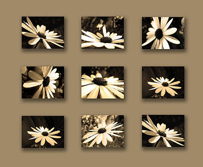 Sepia Daisy Flower Series Art Print