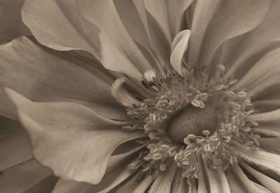 Sepia Floral Art Print by Kristin Elmquist