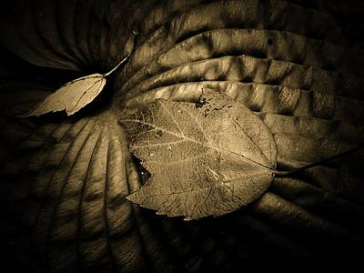 Textures Photograph - Sepia Hosta And Leaves by Beth Akerman