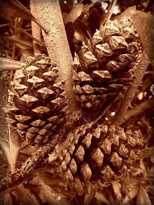Art Print featuring the photograph Sepia Pine Cones Trio by Cindy Wright