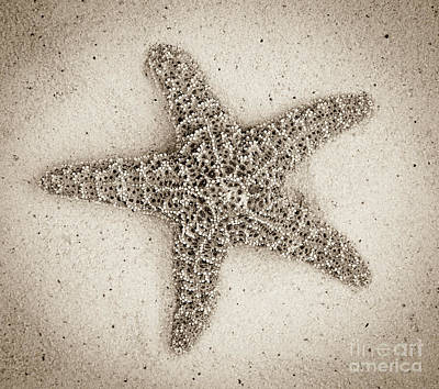 Photograph - Sepia Starfish by Jim And Emily Bush