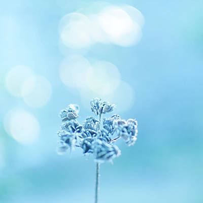 Blue Flowers Photograph - September Frost by Alexandre Fundone