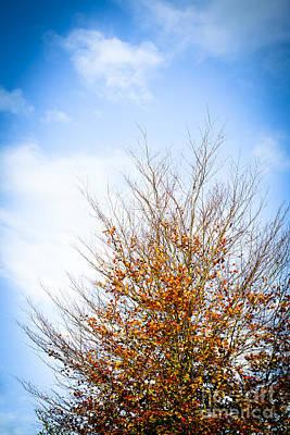 Photograph - September Sky by Jan Bickerton