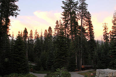 Photograph - Sequoia Sunset by Heidi Smith