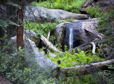 Sequoia Waterfall Art Print by Anthony Citro